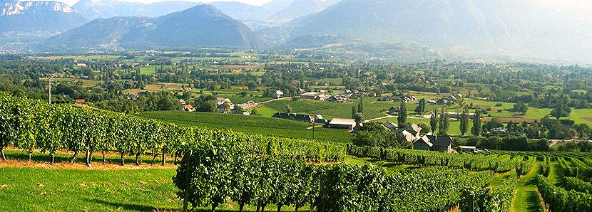 Jura Frankrike Vinregion Concealed Wines Sweden