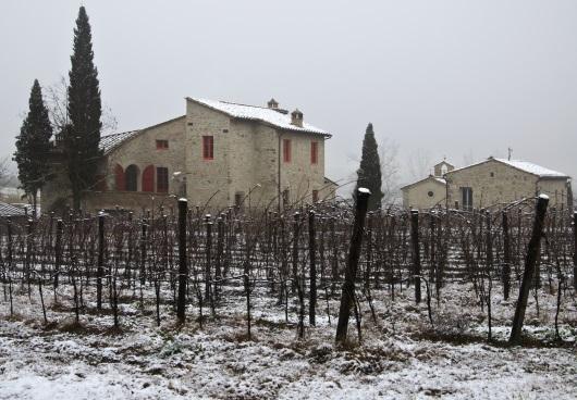 Chianti: Vingården på vintern