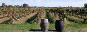 Regionen King Valley, vingårdar