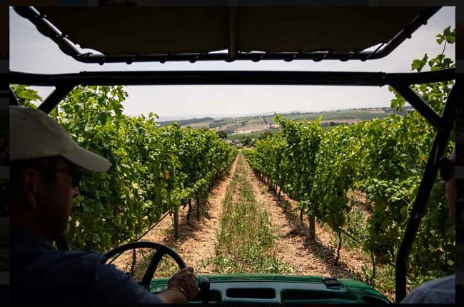 i vingården